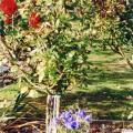 Ian Glendenning's grave
